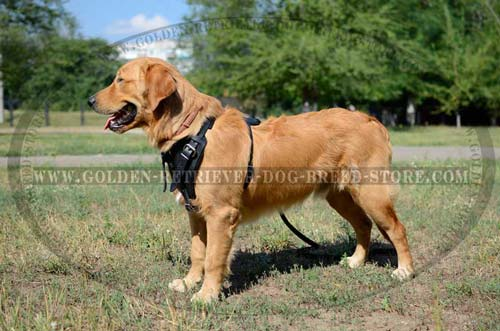 Leather Golden Retriever Harness Adjustable in 4 Ways