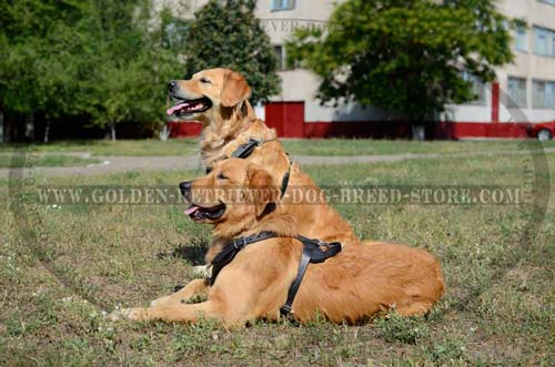 Comfortable Leather Golden Retriever Harness for Walking