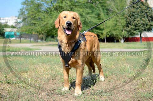 Comfortable Design Leather Golden Retriever Harness