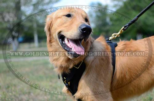 Leather Golden Retriever Harness for Daily Walking