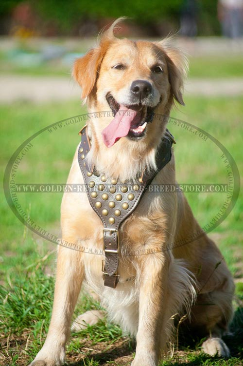 Golden Retriever Harness with Decorations