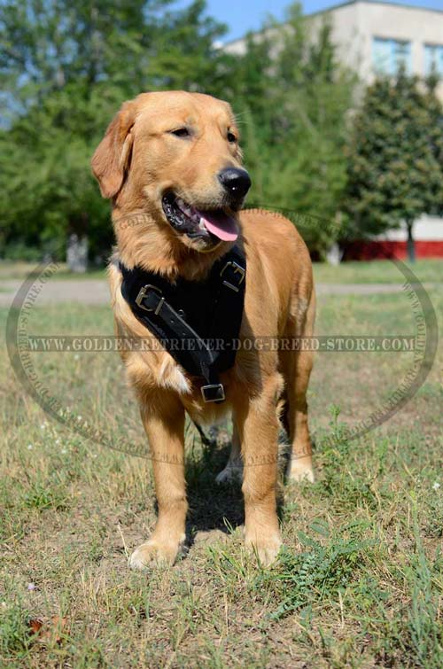 High Quality Leather Golden Retriever Harness