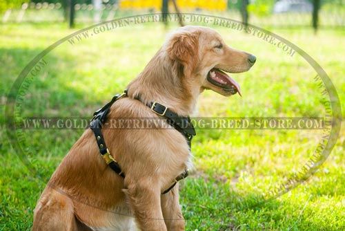 New Design Leather Golden Retriever Harness