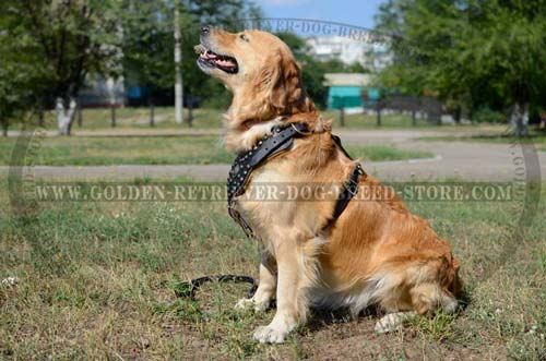 Studded Design Leather Golden Retriever Harness