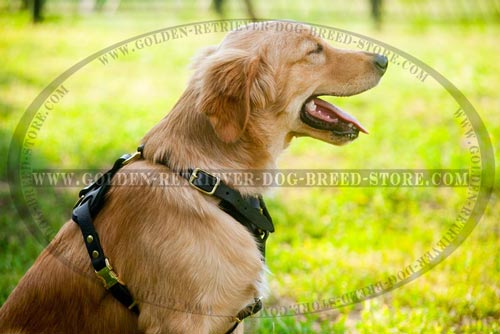 Comfy Golden Retriever Harness of High Quality