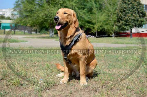 Durable Leather Golden Retriever Harness