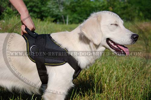 Nylon Golden Retriever Harness with Easy Control Handle