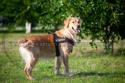 Nylon Golden Retriever Harness for Training with Patches