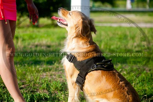 Nylon Golden Retriever Harness for Different Activities