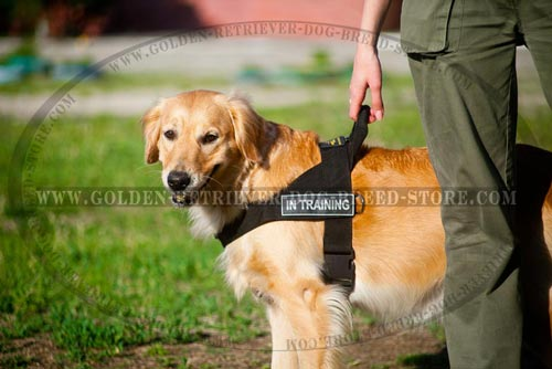 Ergonomic Design Nylon Golden Retriever Harness for Training
