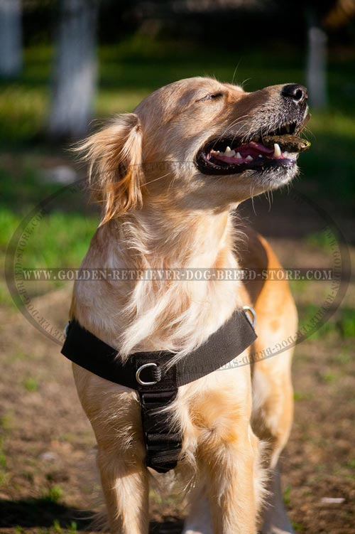 Golden Retriever Harness with Removable Strap