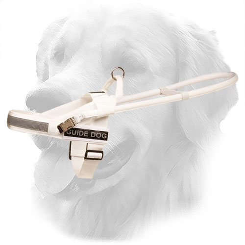 Golden Retriever Harness with Perfect Air Circulation