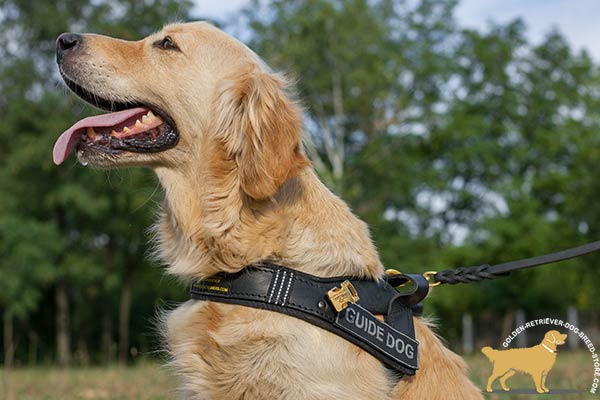 Golden Retriever leather harness hardwearing with d-ring for leash attachment for guidance and assistance