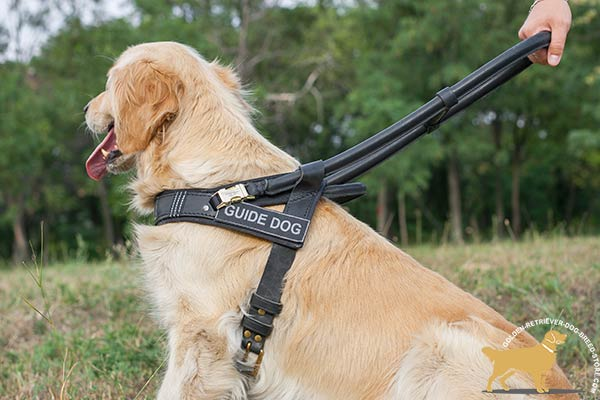 Golden Retriever leather harness for snug fit with adjustable straps for better comfort