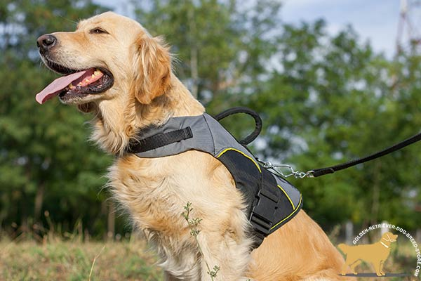 Golden Retriever nylon harness easy-to-adjust with quick release buckle for daily walks