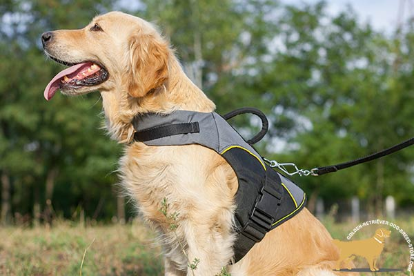Golden Retriever nylon harness with durable handle for any activity