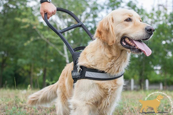 Golden Retriever nylon harness of lightweight material with handle for basic training