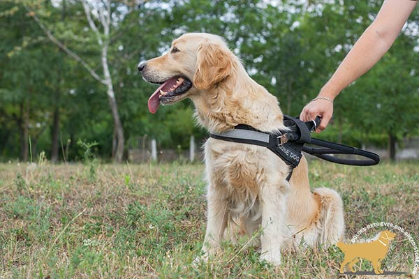Golden Retriever nylon harness any-weather use with quick release buckle for guidance and assistance