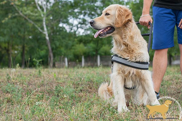 Golden Retriever nylon harness water-windproof with reflective strap for safe walking