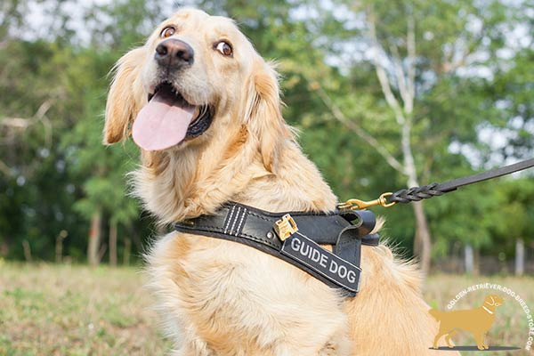 Assistance Golden Retriever Harness with Quick Release Buckle