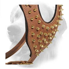 Brass Spikes on Leather Golden Retriever Harness