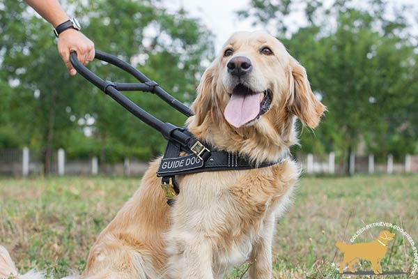 Guide and Assitance Leather Golden Retriever Harness