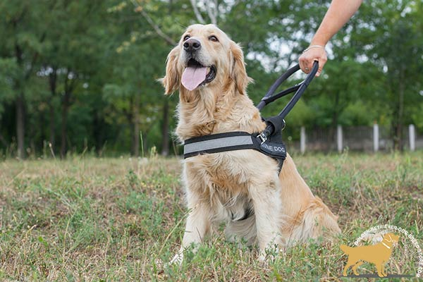 Lightweight Nylon Dog Harness with Removable Steel Handle