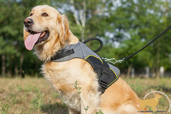 All Weather  Nylon Golden Retriever Harness