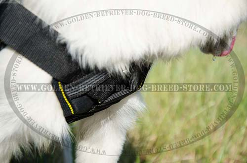 Protective Plate on Nylon Dog Harness