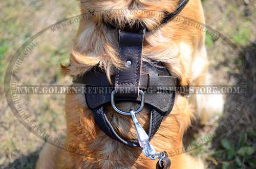 Nickel D-Ring on Leather Dog Harness