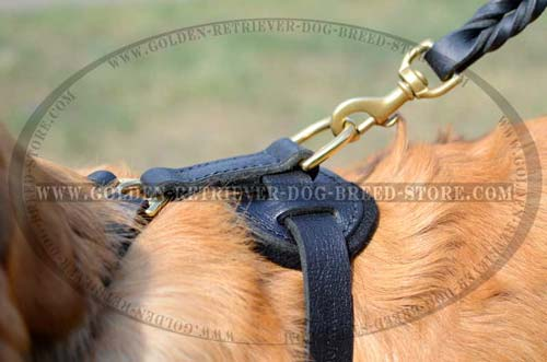 Brass D-Ring on Leather Dog Harness