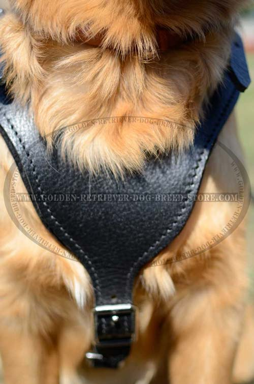 Y-Shaped Chest Plate on Leather Dog Harness