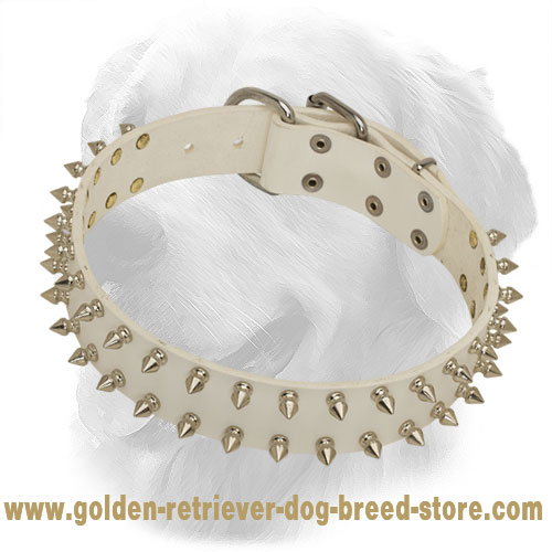 White Leather Golden Retriever Collar with 2 Rows of Nickel Plated Spikes