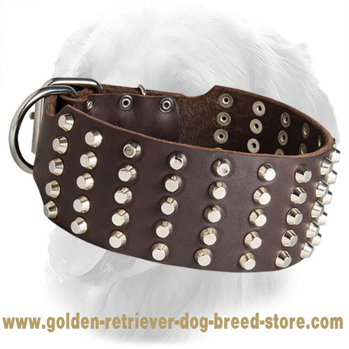Extra Wide Studded Leather Golden Retriever Collar