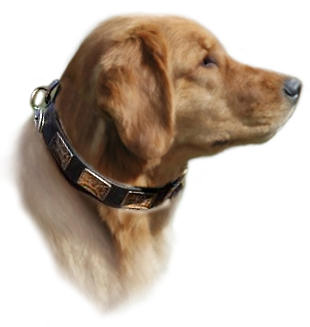 Golden Retriever Handcrafted Leather Dog Collar & Vintage Plates