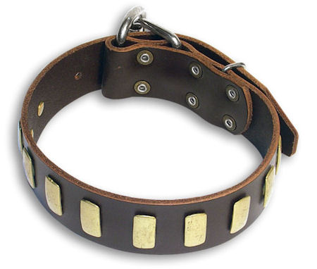 big dog breeds list. This collar will fit dogs with