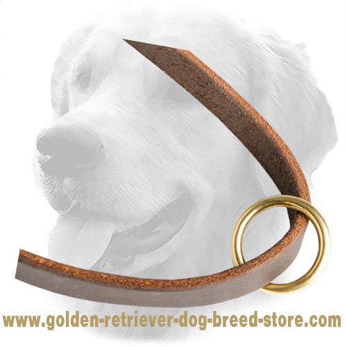 Brass O-Ring on Leather Golden Retriever Leash