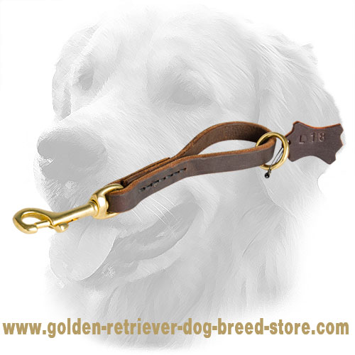 Fast Grab Golden Retriever Leash
