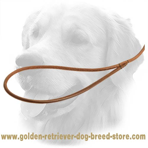 Durable Handle on Golden Retriever Leash
