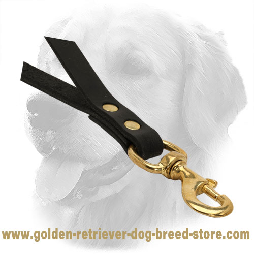 Solid Brass Snap Hook on Golden Retriever Leather Leash