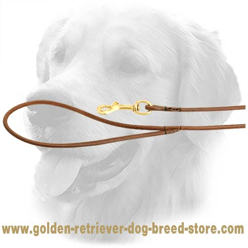Solid Snap Hook on Golden Retriever Leash