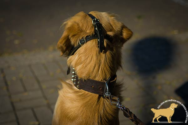 Adjustable Golden Retriever Muzzle for Snug Fit