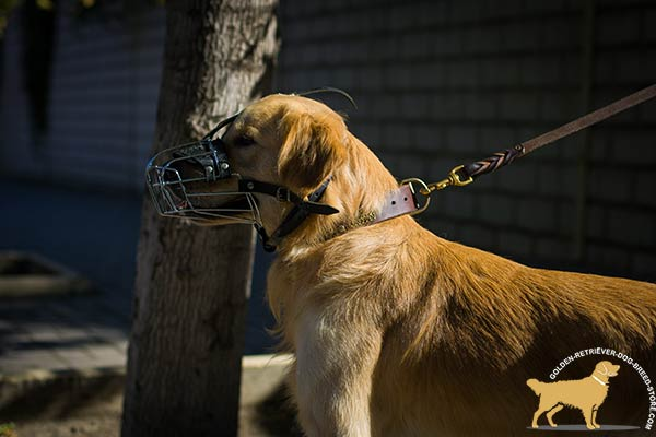 Ventilated Basket Muzzle for Golden Retriever Safe Walking