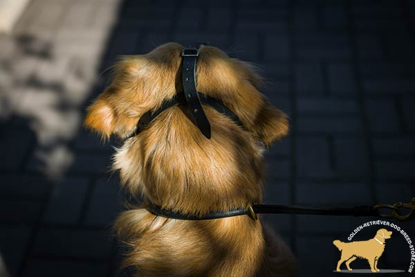 Well-fitted Golden Retriever Muzzle with Adjustable Straps