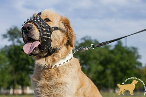 Extraordinary Designer Leather Dog Muzzle with Spikes