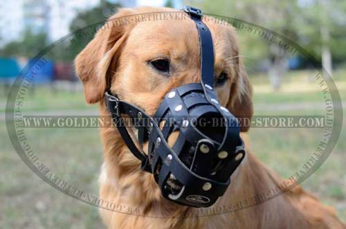 Practical Leather Muzzle for Sporty Dogs