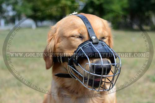 Extra Comfortable Muzzle for Golden Retrievers