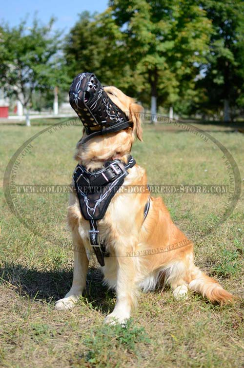 Golden Retriever Leather Muzzle for Walking in Style