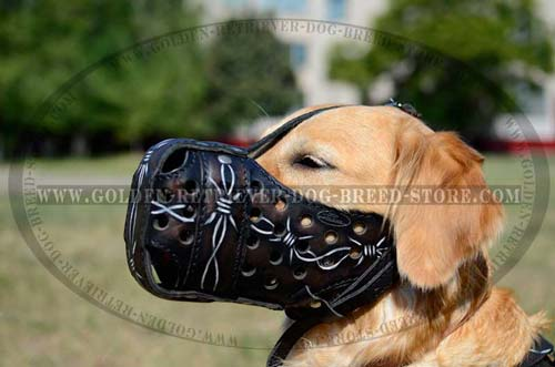 Golden Retriever Decorated Leather Muzzle