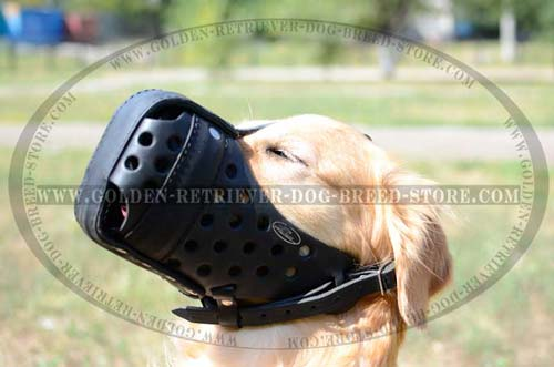 Golden Retriever Muzzle for Active Dogs